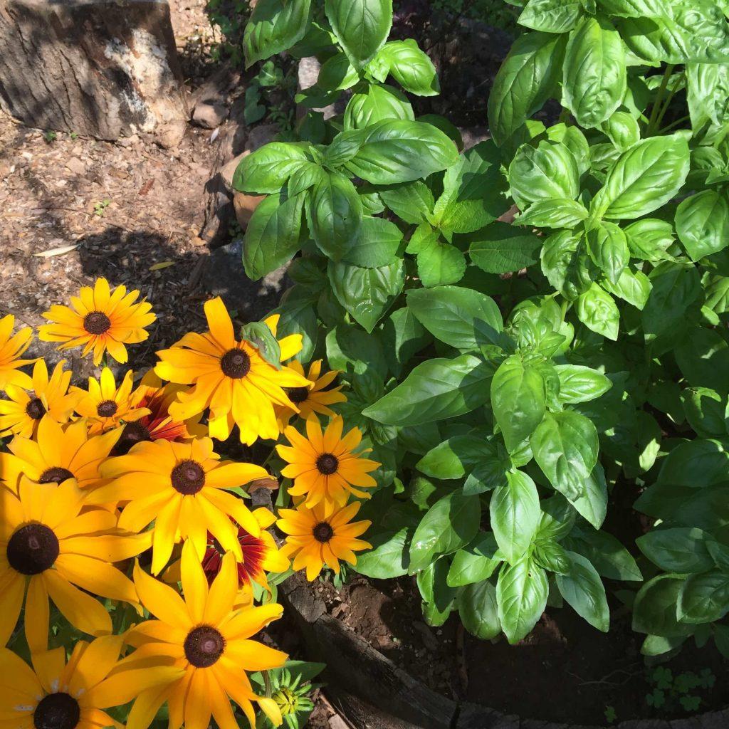 Rosebud's garden plants